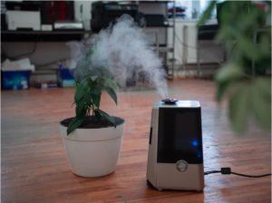 how to humidify a room naturally